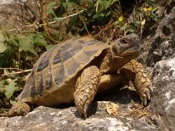 turtle-467264_640
