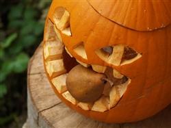 pumpkin-508684_640