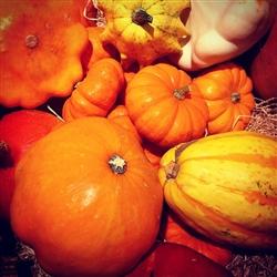 pumpkin-677438_640