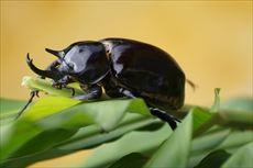 bug-988291_640